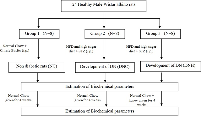 Effect of Honey-treatment on Blood Glucose and Lipid Profile in Experimental Diabetic Neuropathy Rats