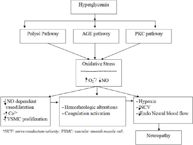 Possible mechanisms of diabetic neuropathy